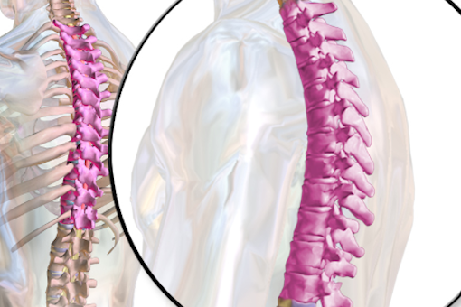 How to keep your Spine healthy?